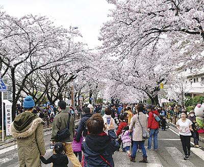 桜の下で多彩な催し