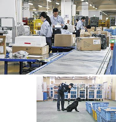 郵便物を検査する職員(上)と麻薬探知犬による検査