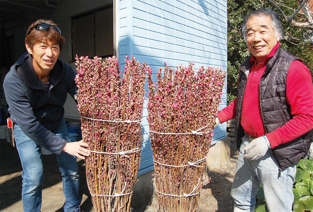 馬絹の花桃、出荷ピーク
