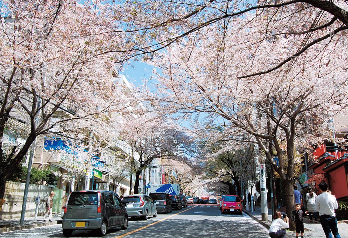 桜愛でる2つの名所