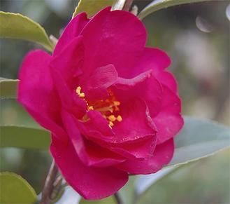 久本桃之園公園の階段に面した一角に赤い花々が咲く