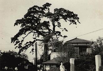 昭和32年の諏訪の一本松(区への提供写真から)