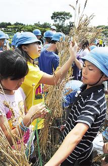 強い日差しの中、手際よく作業を進めた児童たち