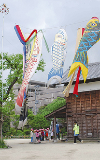 高々と掲げられる鯉のぼり(昨年)
