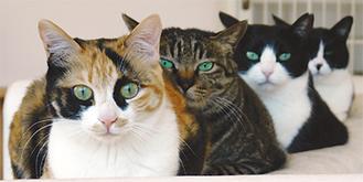「猫雑貨も沢山取り揃えています。お気軽にお立ち寄りください」
