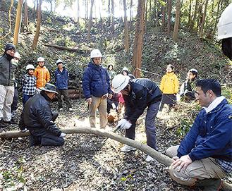 谷底の間伐体験