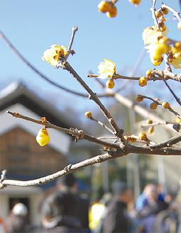 黄色い可憐な花が咲く