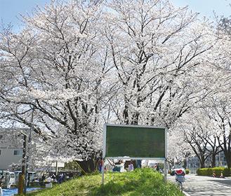 春には見事な桜が咲き誇る「かすみ提」