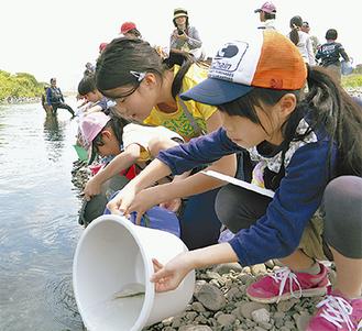 多摩川にアユを放流する児童たち