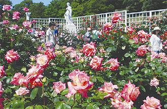バラが咲き競う苑内(昨年)