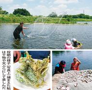 多摩川で鮎の「投網会」