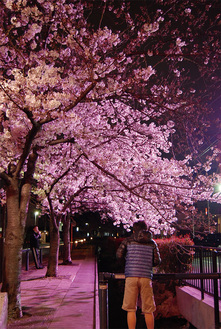 江川せせらぎ遊歩道桜のプロムナード(巌川橋)