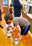 AI犬「シュガー君」の存在も象徴的