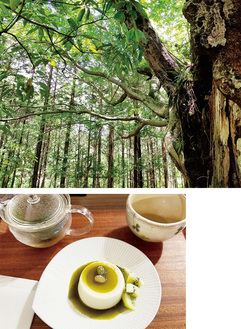 森林の自然体験、足柄茶とそのスイーツが楽しめる