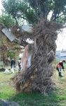 木に絡まるゴミや枯れ草
