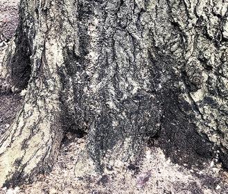 根元にたまったフラス東高根森林公園で9月12日撮影