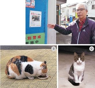 【1】掲示板に貼られた里親募集ポスターのチラシと内田会長【2】地域猫活動の対象として登録済みの子猫【3】不妊去勢手術後の猫の耳は目印としてカットされる