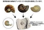 「化石発掘体験」も楽しめる