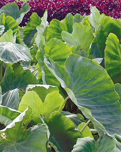 地元農産物の安全対策