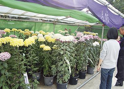 58本の菊が美競う