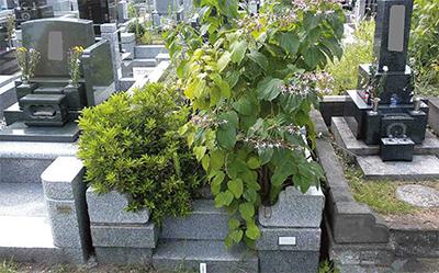 無縁化の墓所を整理へ