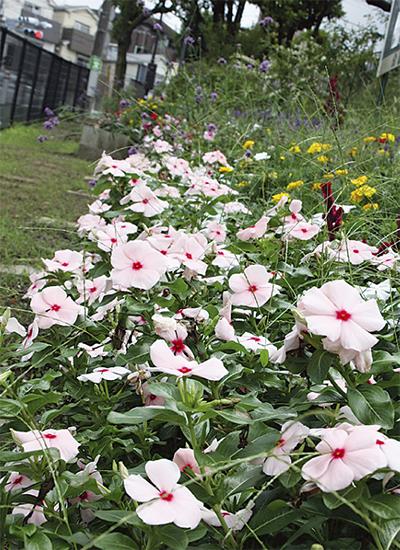 残暑の街を花々が彩る