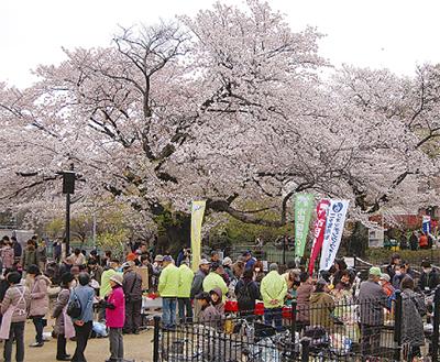 円筒分水で春の祭り