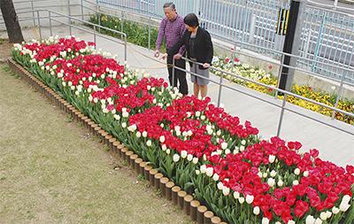 60周年祝う花壇見ごろ