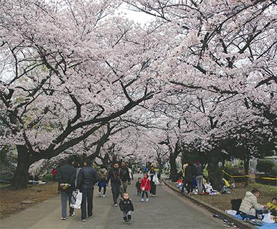 空一面桜色に
