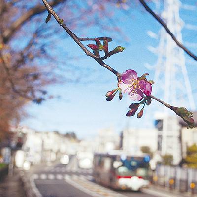 三寒四温近づく春