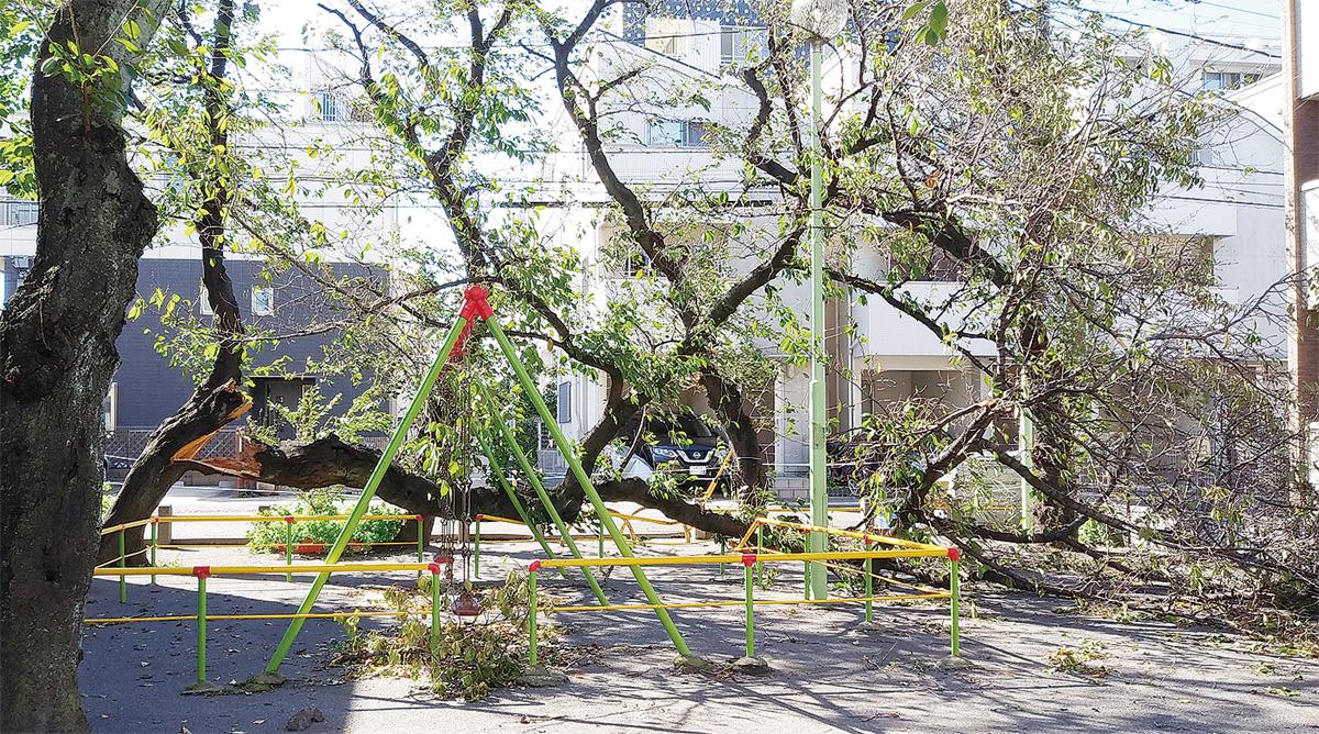 倒木など区内39件