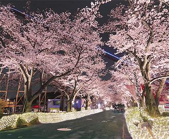 270メートルにも及ぶ桜並木