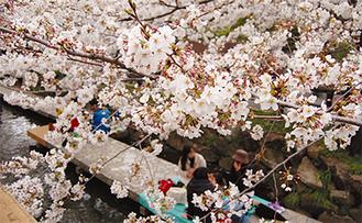 川沿いの桜並木に大勢の人が訪れた