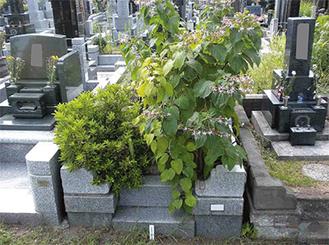 雑草が生い茂る無縁化した墓所(写真は霊園事務所提供)