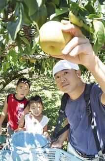 大切に育てた梨を丁寧に収穫する田村さん