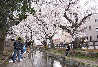 桜の名所として知られる宿河原周辺の二ヶ領用水