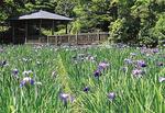 自然ゆたかな東高根森林公園には、散歩やお花見に訪れる予定