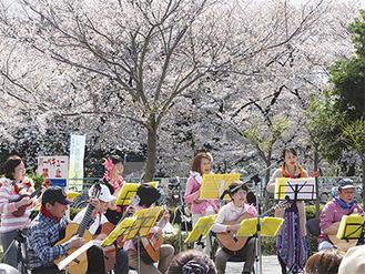 咲き誇る桜の下で演奏を披露する出演者