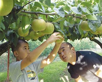 田村果樹園の田村賢太郎さん(41)と息子の太陽くん(11)。収穫期は家族総出で作業をする