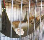 猫のストレスを軽減するケージ内のハンモックも寄附物品