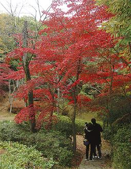 11月には紅葉が見られる生田緑地(昨年)