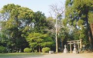 杉山神社、緑の保全地域に