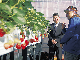 福田市長(左)にイチゴ栽培について説明する北見さん