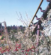 梅咲き誇る園内に招待