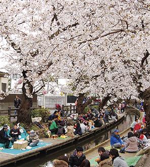 桜が咲き競う川沿い