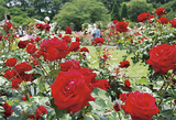 530種、華麗に咲き乱れ