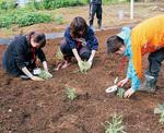 ハーブを植える学生=関係者提供