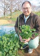 のらぼう菜に新品種
