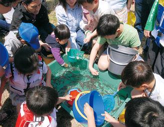 アユの稚魚をバケツに入れる子どもたち