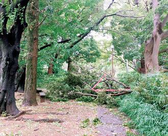 三田第1公園で発生した倒木=10日、多摩区道路公園センター提供